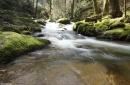 Geroldsauer Wasserfälle bei Baden-Baden
